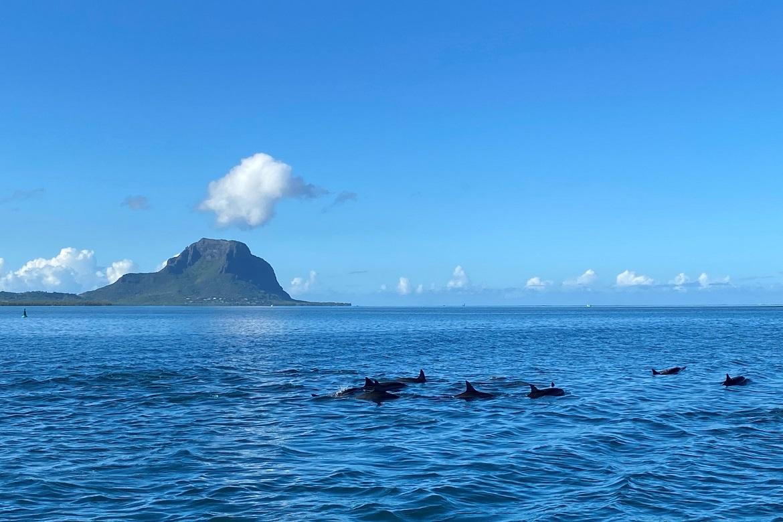 rencontre-dauphins-Enjou-Mauritius-Retreats